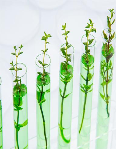Envases con plantas blog
